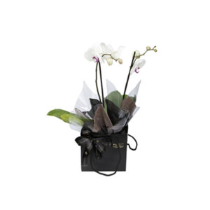 Christmas orchid in a Katie peckett gift branding