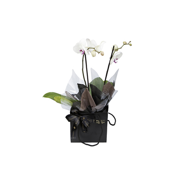 Orchid in a Katie peckett gift branding