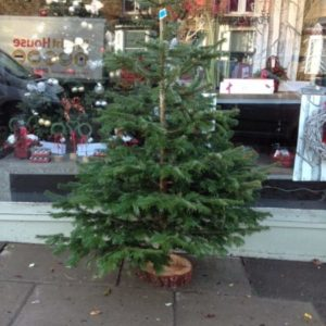 Christmas Trees Sheffield florist