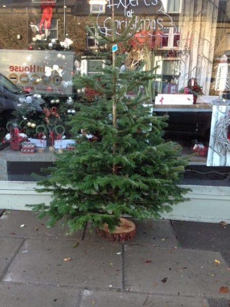 Christmas Trees Sheffield florist