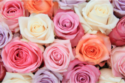 Top 5 Eco Friendly Flowers for Ethical Bouquets