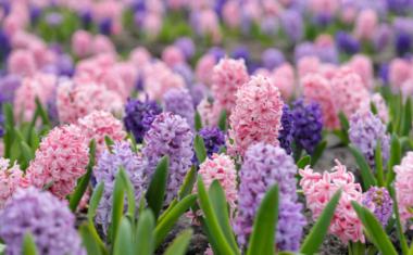 Top 5 Mood Lifting Fragranced Flowers