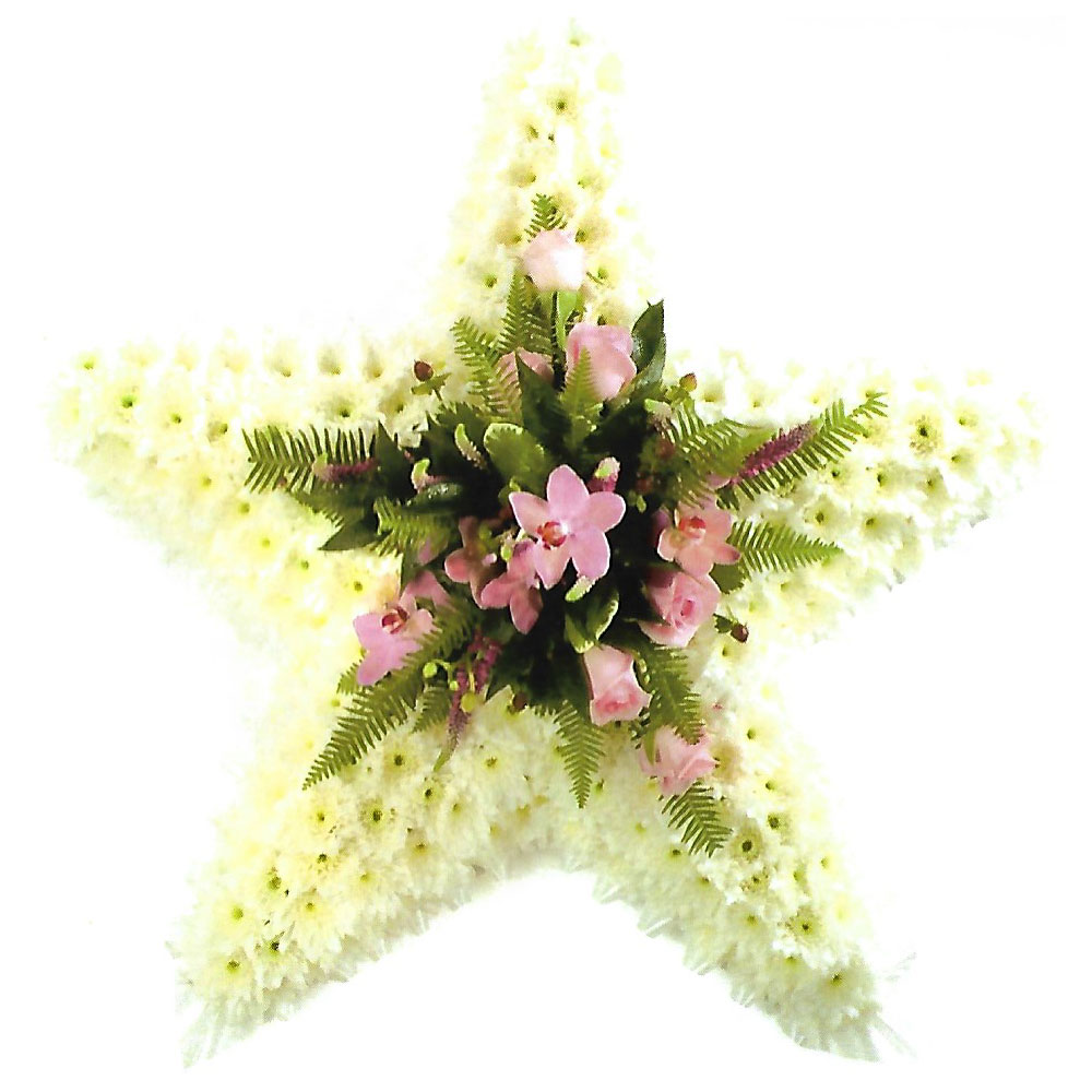 Pink And White Star Flowers Sheffield From Katie Peckett Quality