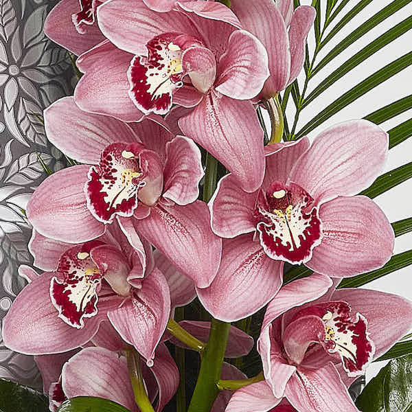 modern Cymbidium hand tied Orchid flower shop Sheffield
