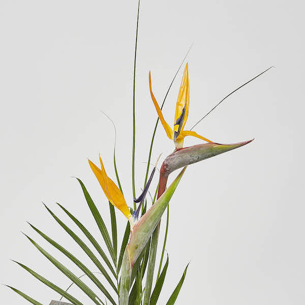 modern tropical bouquet online flowers Sheffield