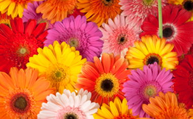 Embrace the Latest Floral Trend – 70's Psychedelics!