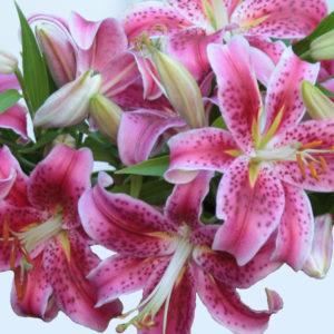 pink oriental lillies