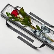 single red rose in presentation box for valentines day