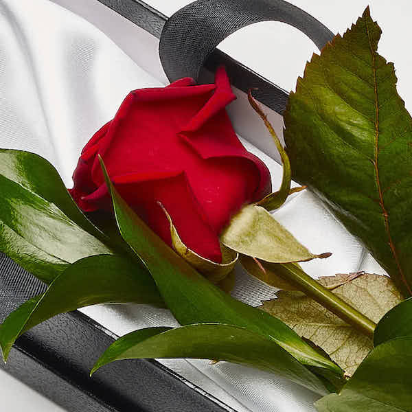 single red rose for valentines day