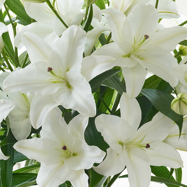 white-oriental-lily-bouquet